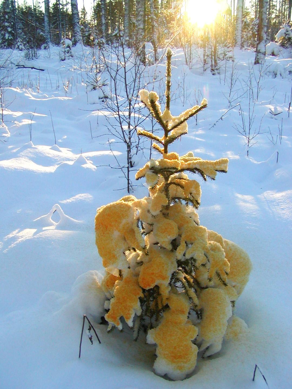 Foto av objekt, snö målat med vattenburet pigment